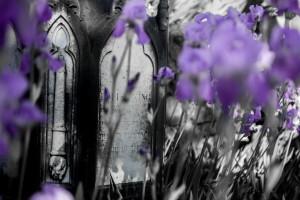 cimitero degli inglesi_36_resize