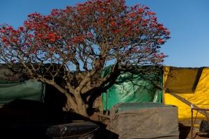 Sudafrica2016_33.jpg