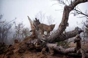 Sudafrica2016_37.jpg