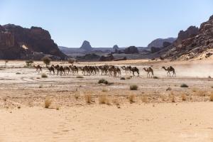 il fascino incomparabile del deserto-06.jpg