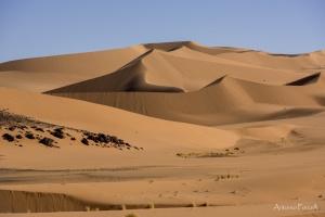 il fascino incomparabile del deserto-13.jpg