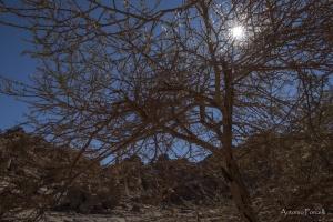 il fascino incomparabile del deserto-23.jpg