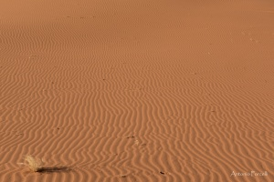 il fascino incomparabile del deserto-32.jpg