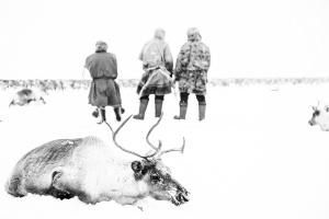 Caccia alle renne_19.jpg