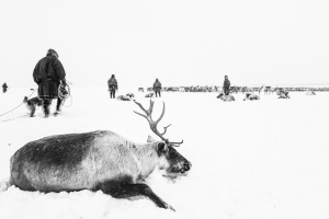 Caccia alle renne_21.jpg