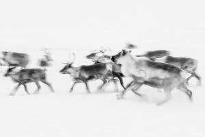 Caccia alle renne_25.jpg