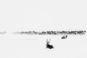 Caccia alle renne_26.jpg