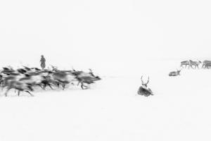 Caccia alle renne_27.jpg