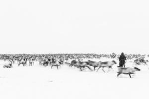 Caccia alle renne_29.jpg