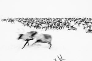 Caccia alle renne_30.jpg