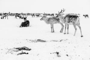 Caccia alle renne_35.jpg